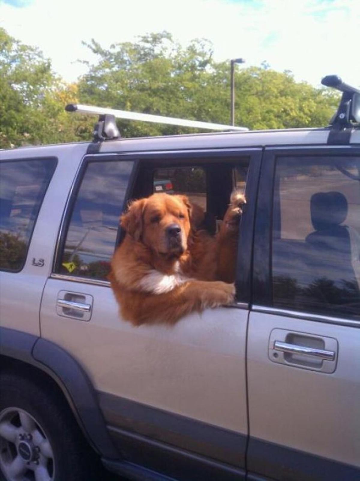 cane in villeggiatura