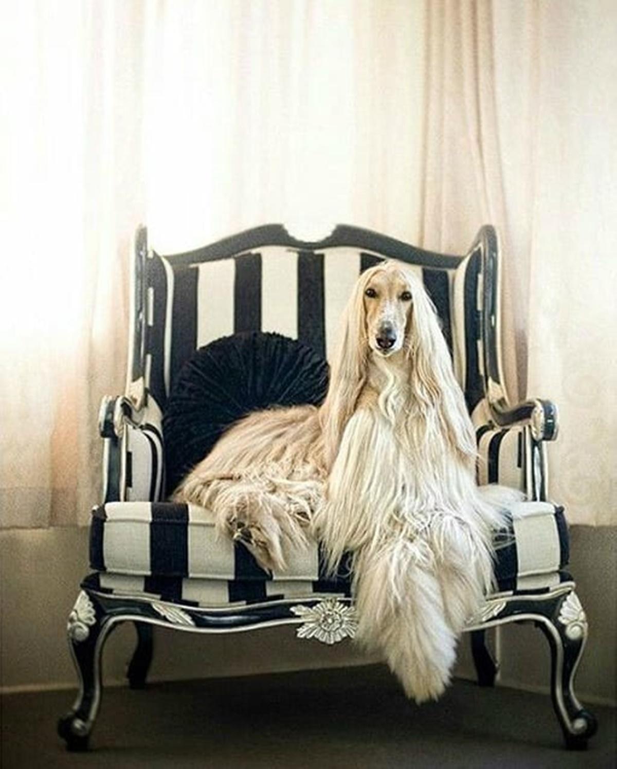 cane sulla poltrona