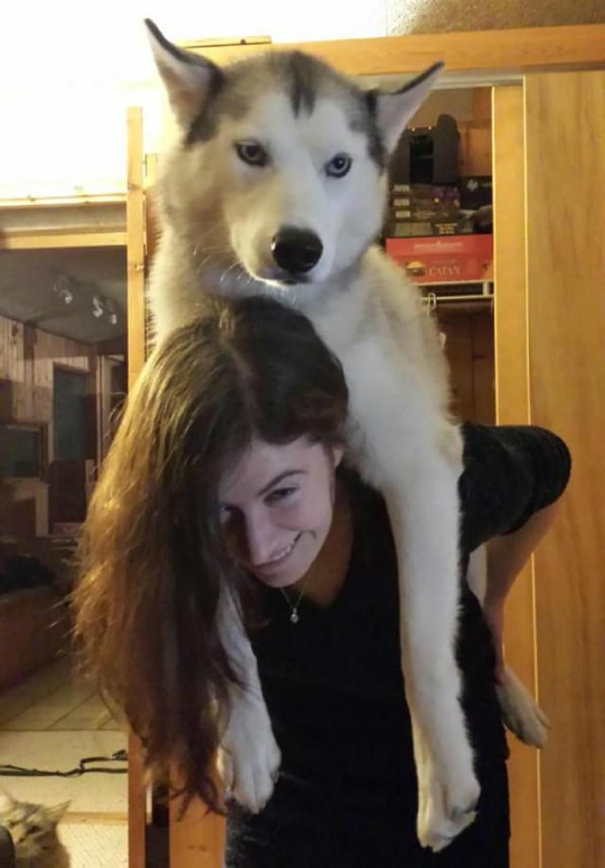 cane odia giochi
