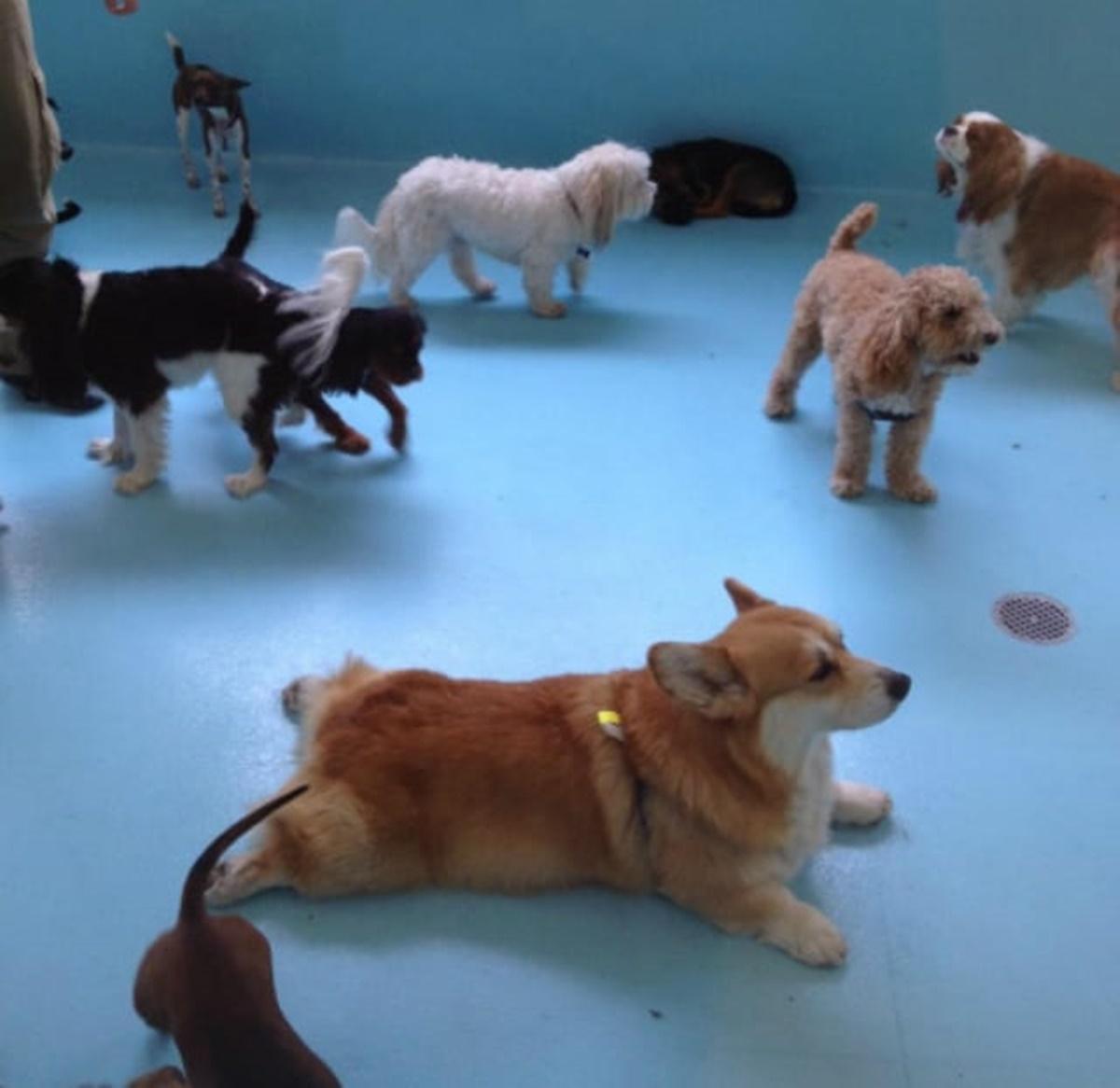 cane stufo di cani