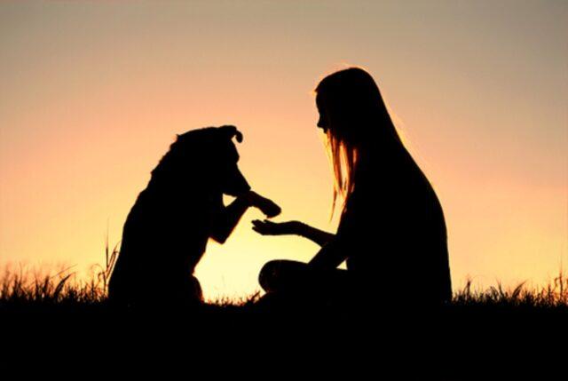 cane e ragazza al tramonto