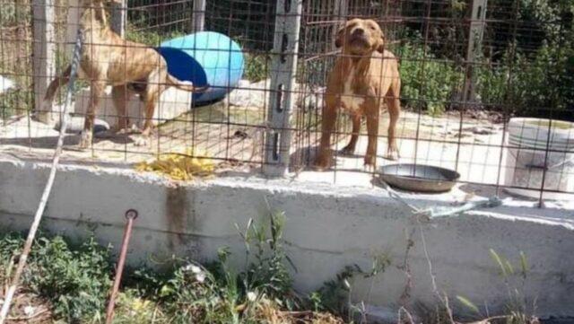 cani sotto al sole