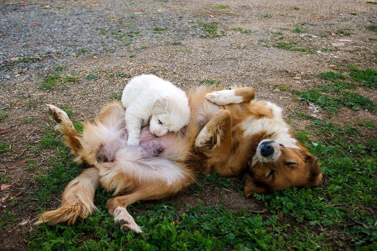 cane cucciolo gioca con adulto