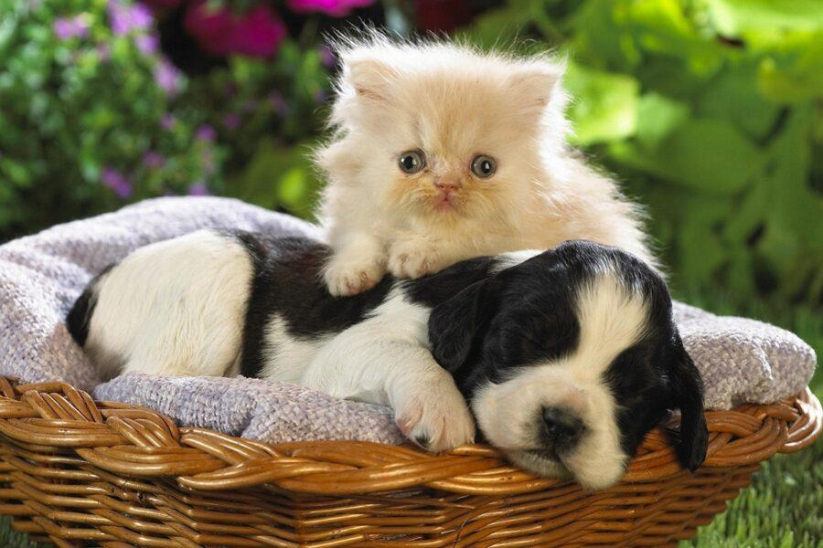 due cuccioli riposano in una cesta