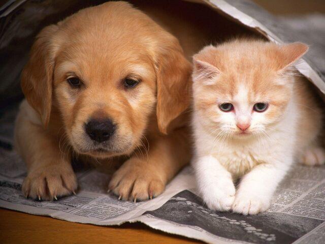 cucciolo di cane con un gattino
