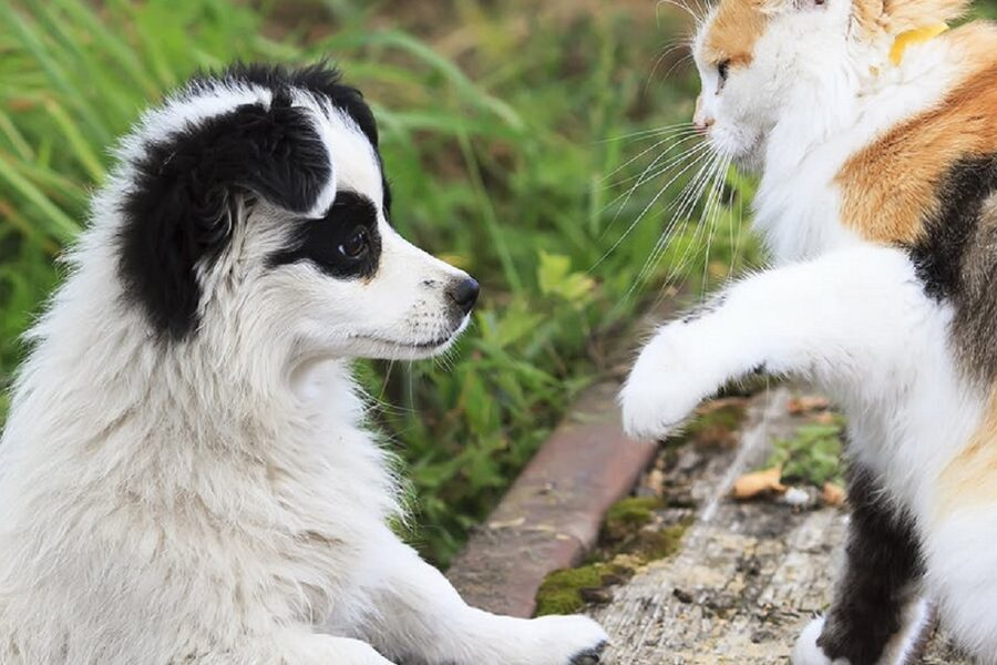 cagnolino bianco e nero con un gatto