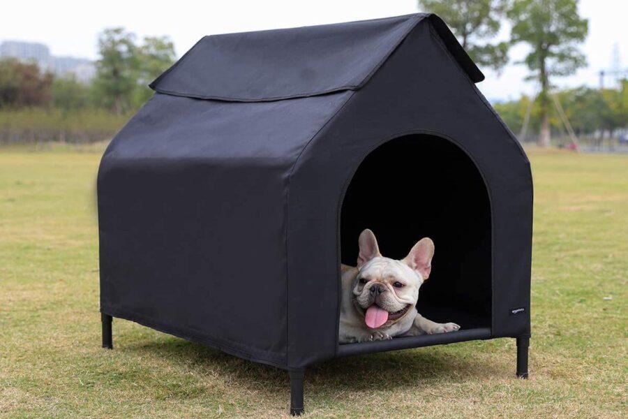 cane nella sua cuccia in giardino