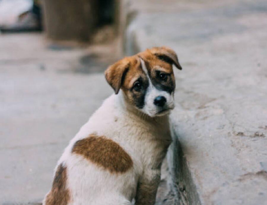 cane disperso strada scontento
