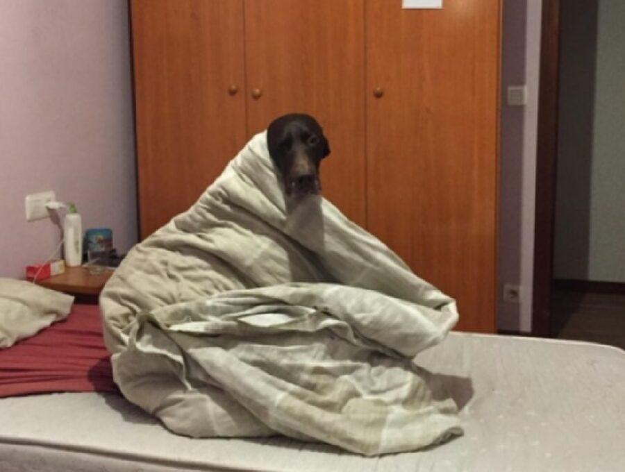cane nero sente freddo