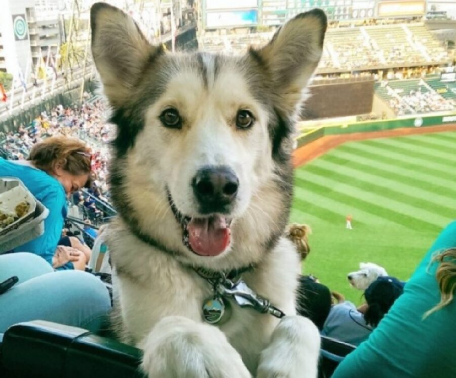 cane partita di baseball