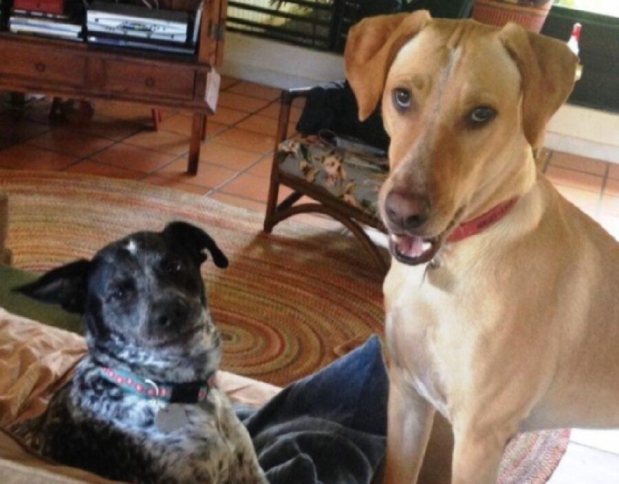 cane fa dispetto all'amico