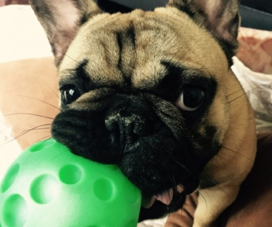 cane palla verde in bocca