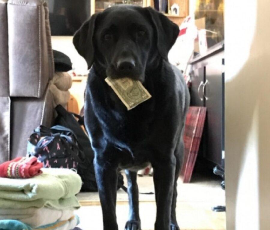 cane nero con soldi in bocca