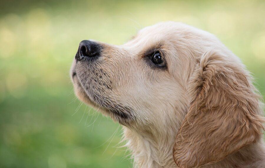 cane dal muso tenero