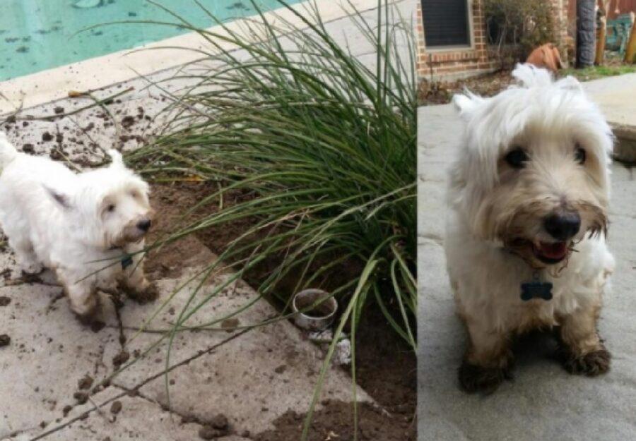 cane sradica pianta giardino