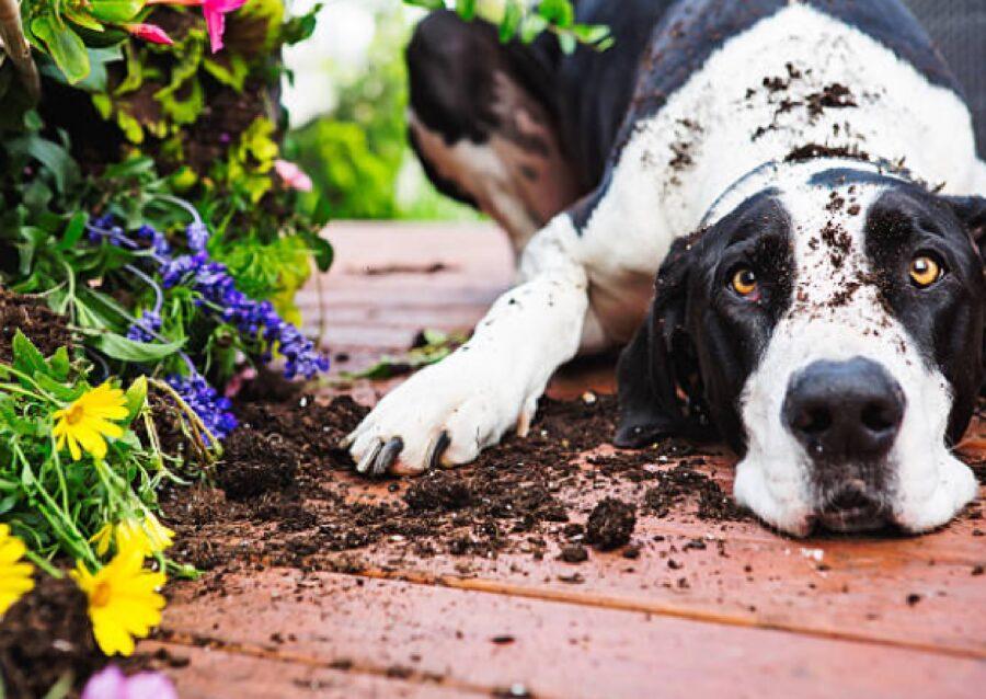 cane migliore amico del giardino
