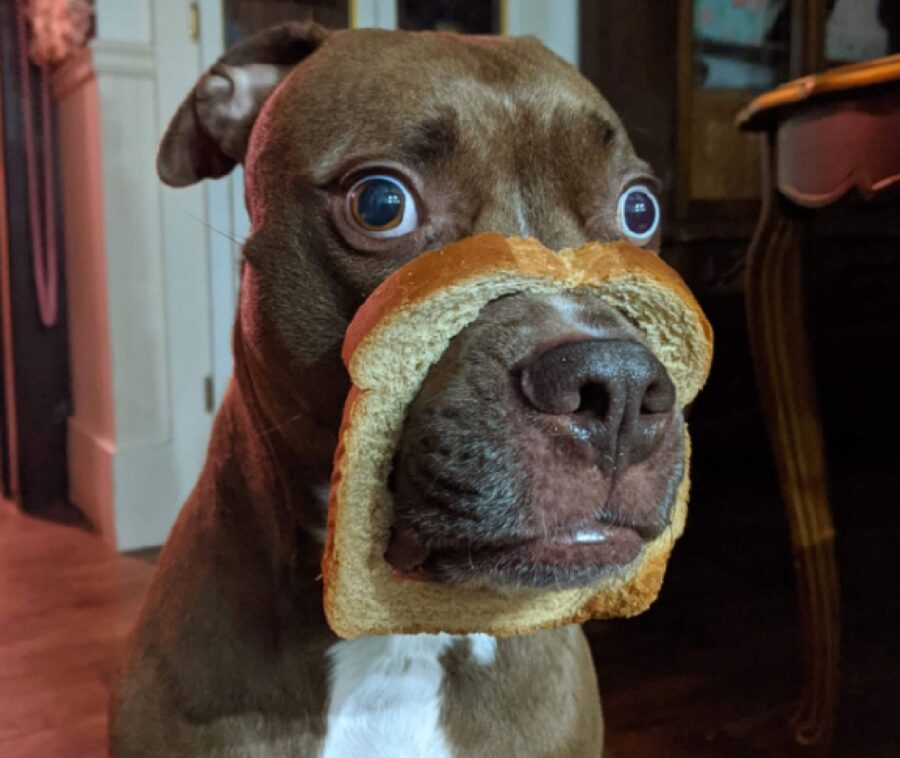 cane mangia pezzo di pane