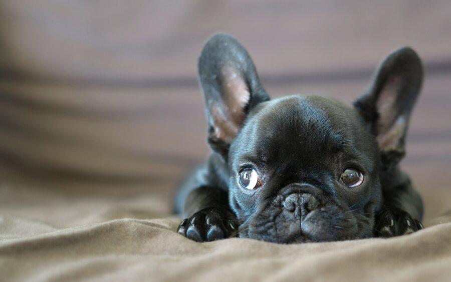 cane sul letto