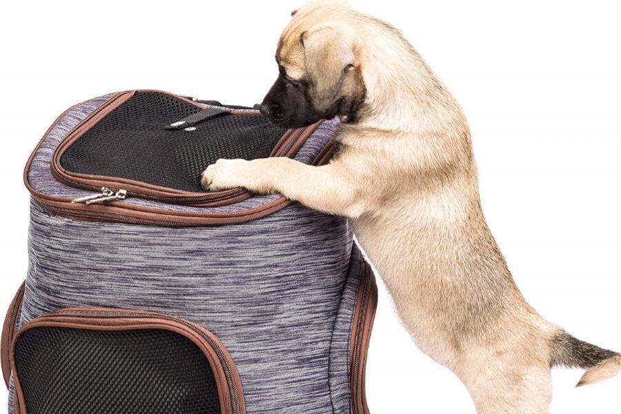 cane che guarda kennel