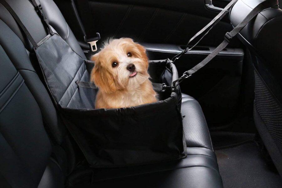 cane nel seggiolino auto