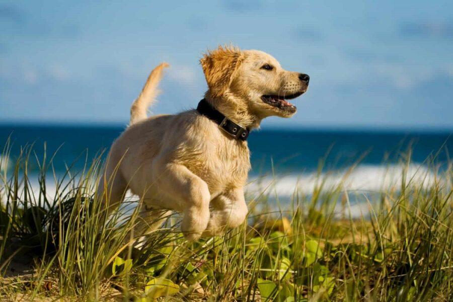 cagnolino su un prato vicino al mare