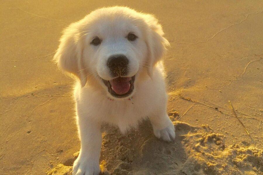 cagnolino bianco in spiaggia