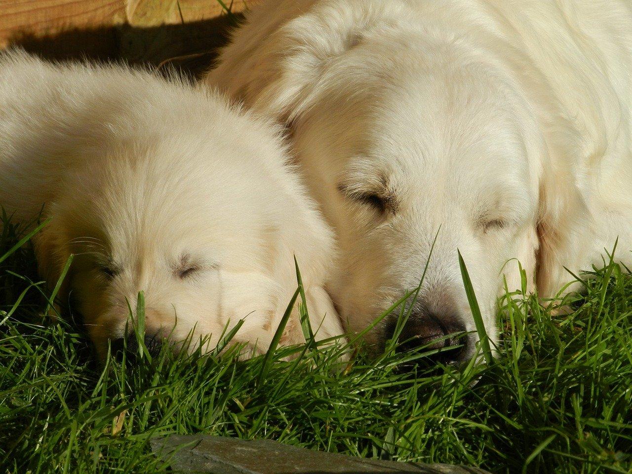 mamma-cane e cucciolo