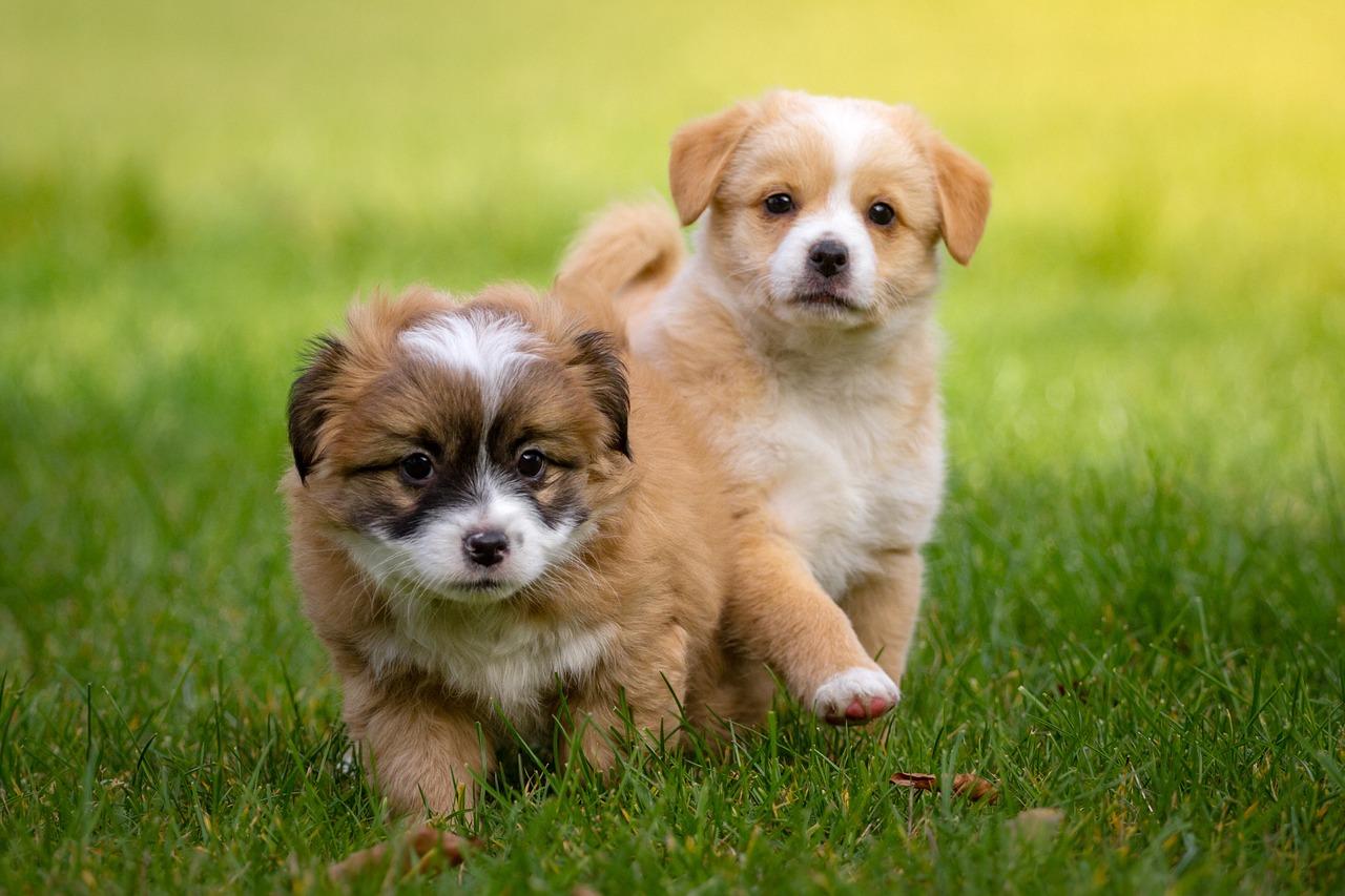 cagnolini in compagnia