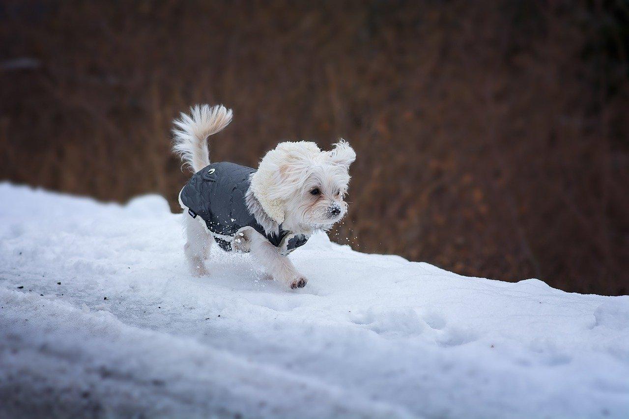 cucciolo di cane in mezzo alla neve