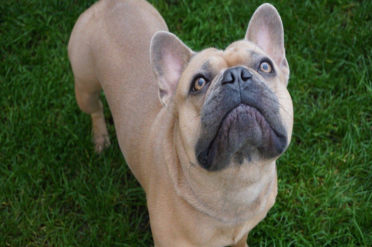 cane occhi enormi
