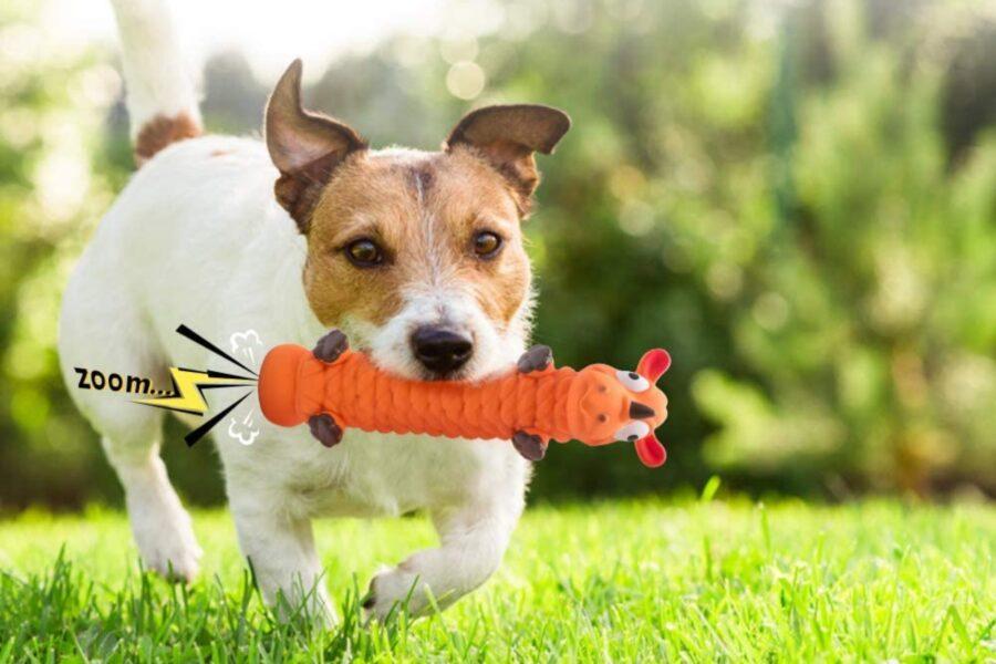 cane in giardino che gioca