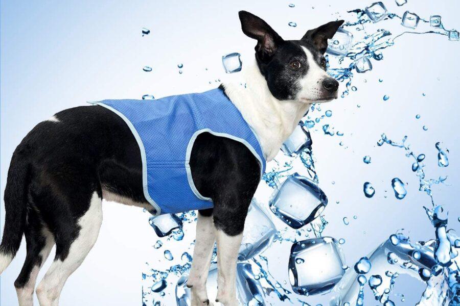 cane con con gilet rinfrescante