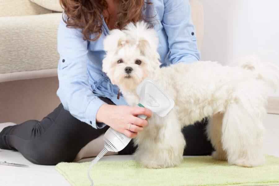asciugacapelli per cane