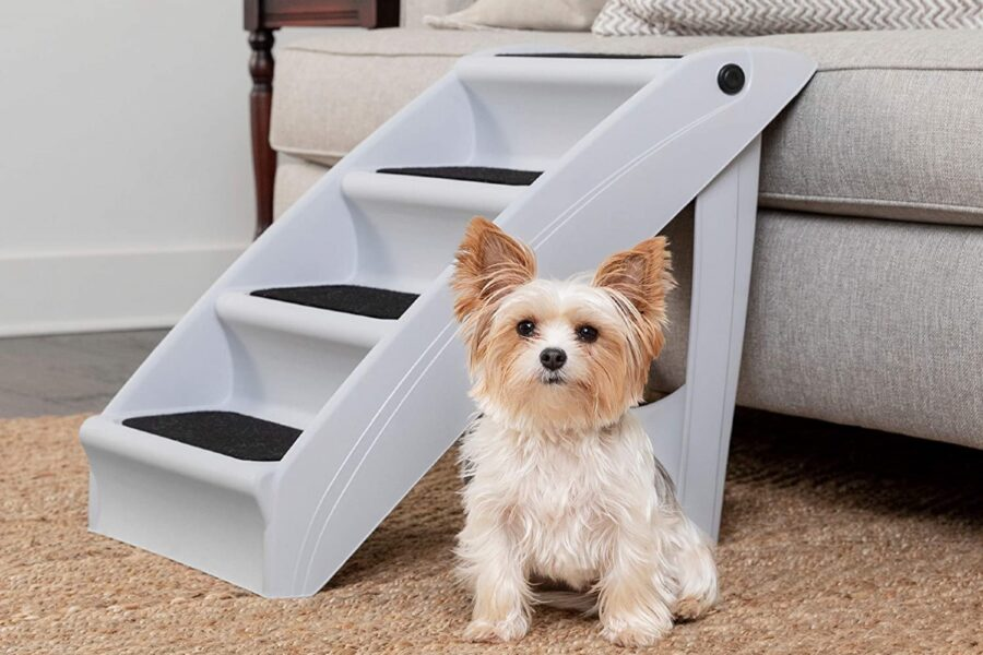 scala per cani