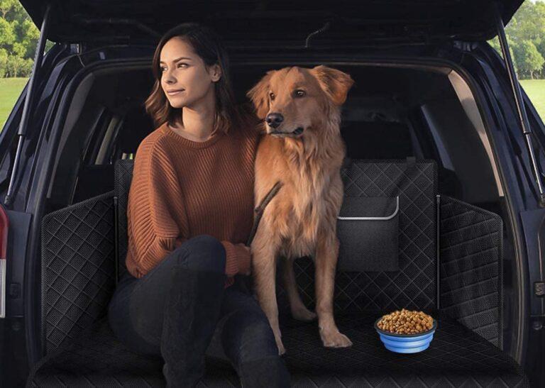 accessori per il cane in macchina