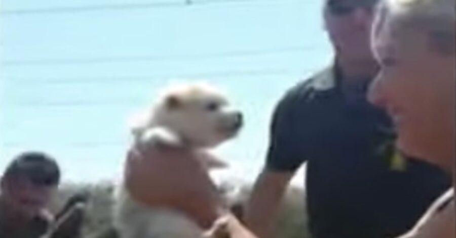 cucciolo salvato in braccio alla padrona