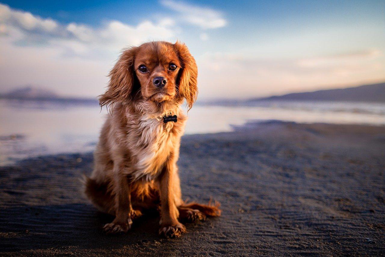 cane si rilassa in spiaggia