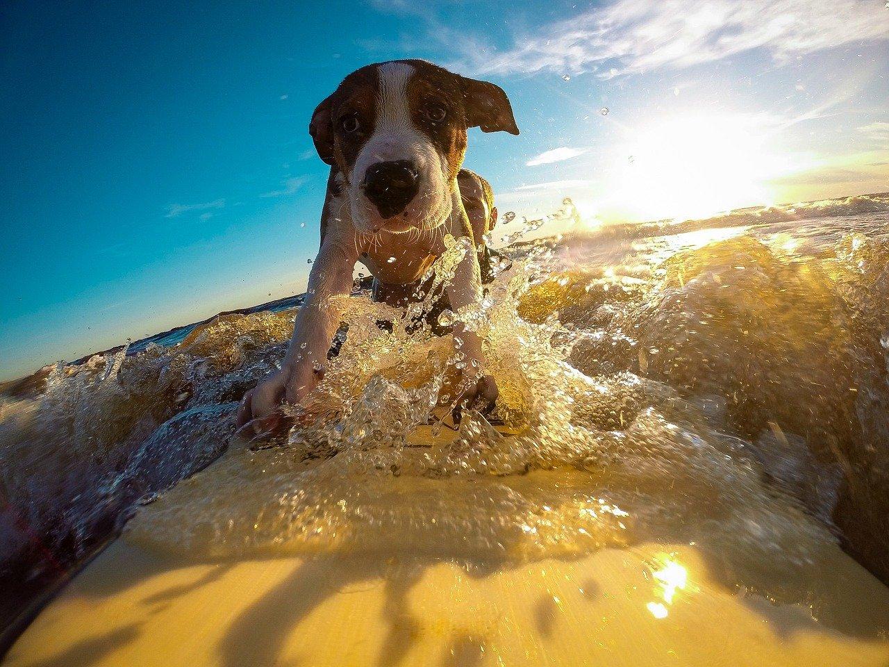 cagnolino nell'acqua