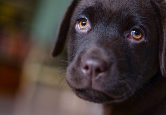 cane occhi teneri