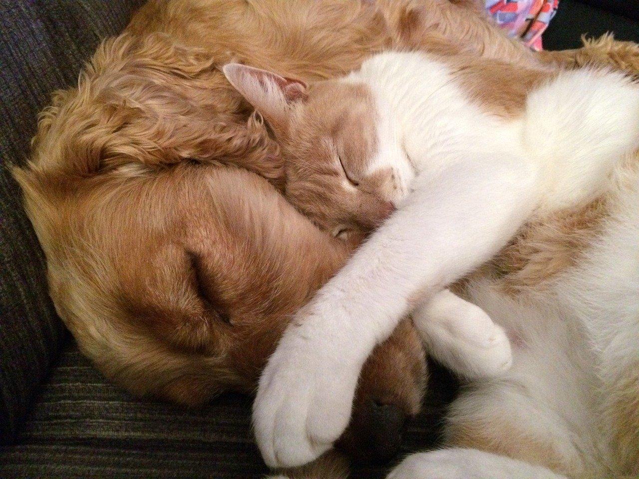 gatto accoccolato sul cane