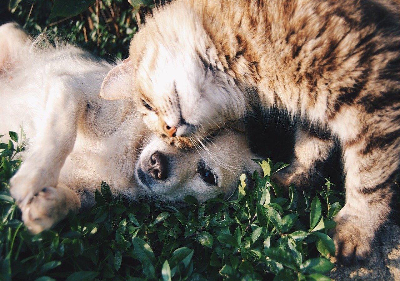 cane e gatto si coccolano