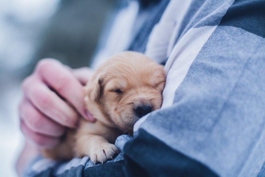 cucciolo tra le braccia