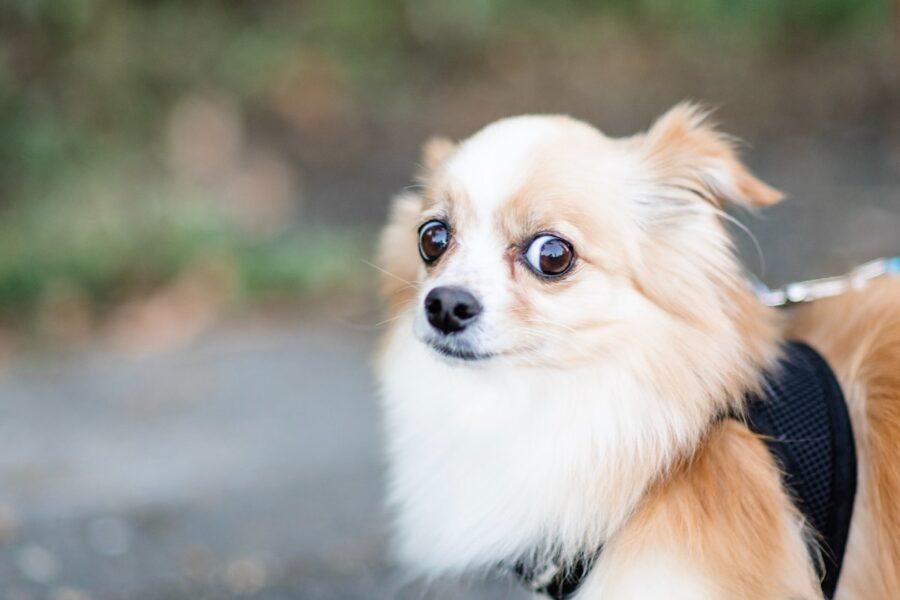 cane che ha timore