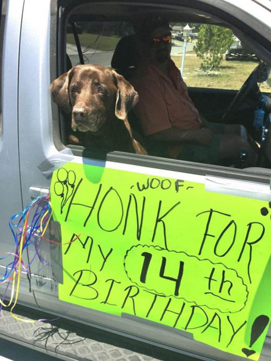 cane marrone festeggia 14° compleanno