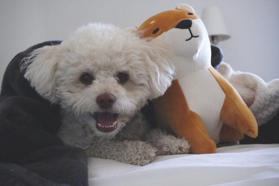 cagnolino con pupazzo