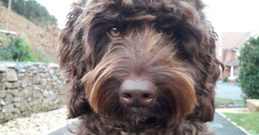 cane salva una donna dal suicidio