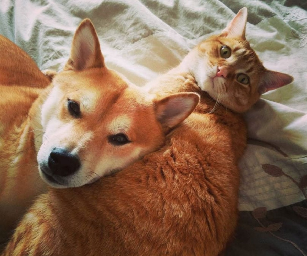 cane e gatto arancione