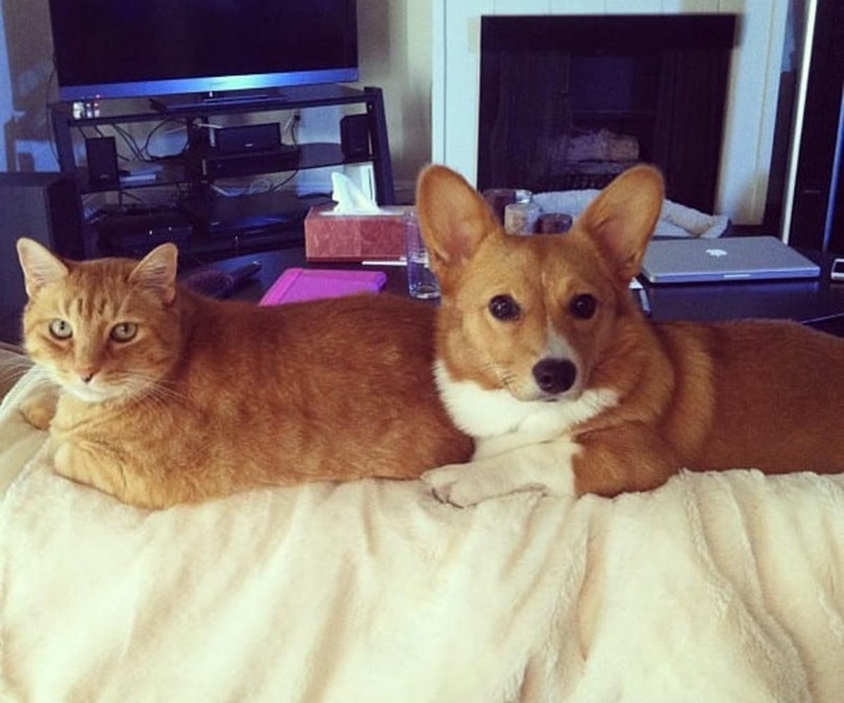 cane e gatto simili