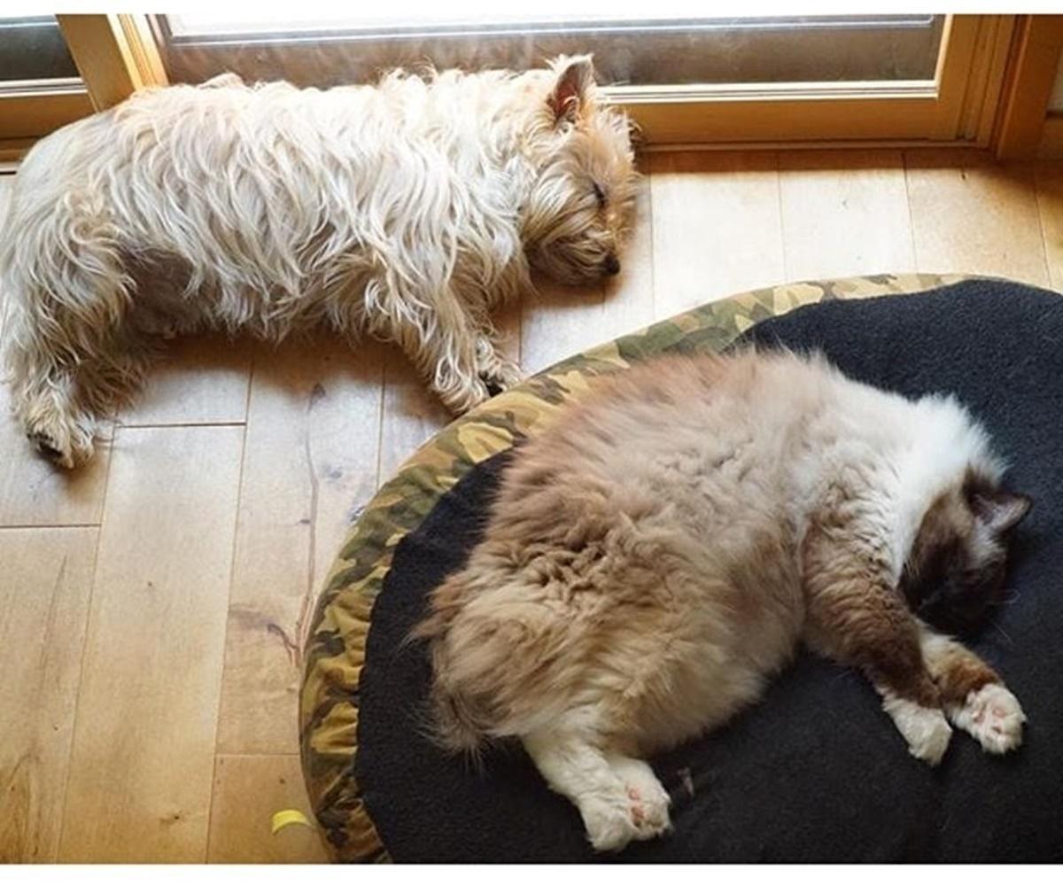 gatto e cane tappeto