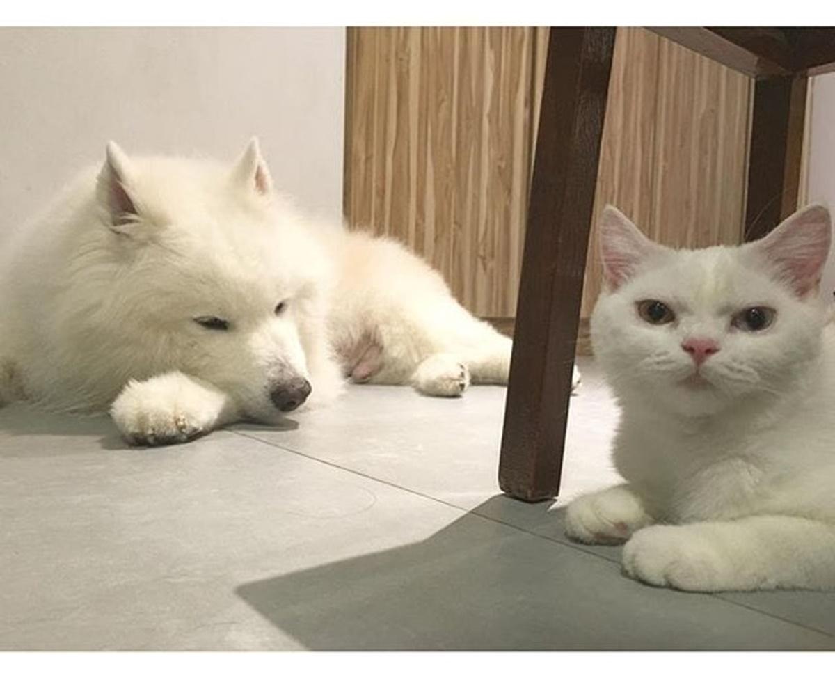 cane gatto bianchi